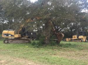 重型机械清理树木